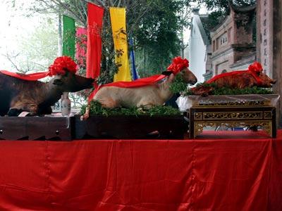 lễ dân Bát Tràng - mâm lễ tam sinh bao gồm trâu, dê và heo.